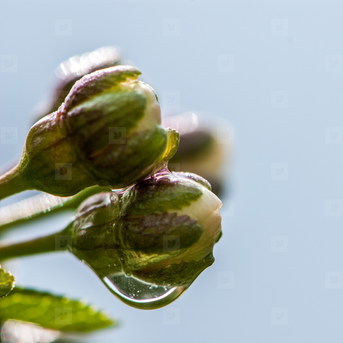 Rain drops   macro   plants