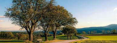 Tree allee