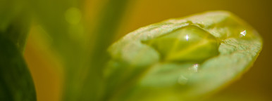 rain drop   leaf