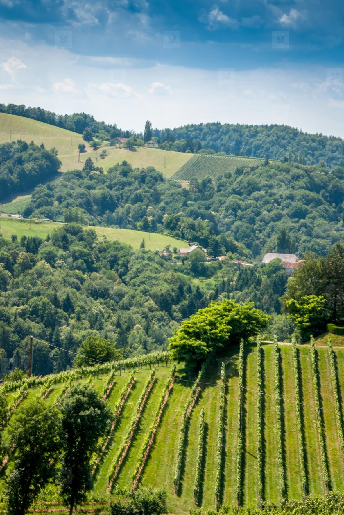 Wine hille