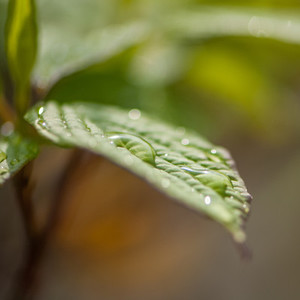 Leaf with water dorps