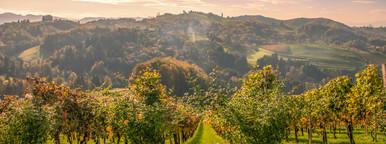 Wine hills   autumn