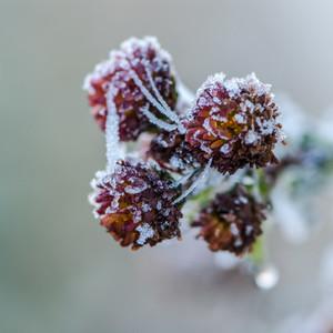 Wild berries   Frozen