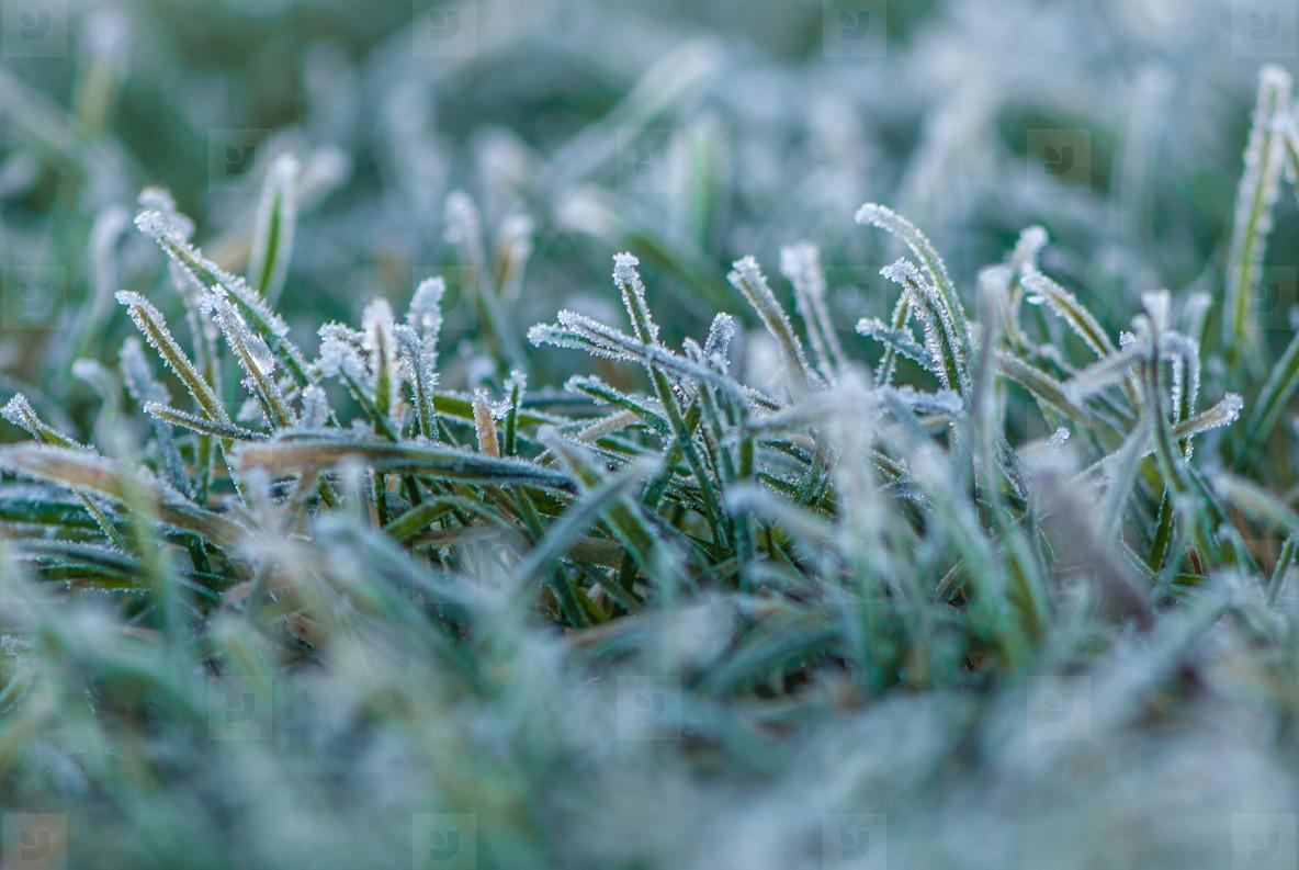 Frozen gras