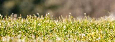 Fresh grass   frozen