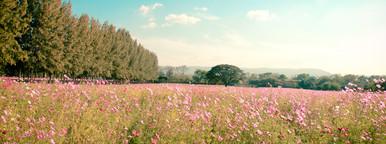 Landscape of beautiful flower