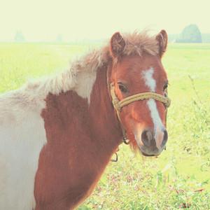 pony in farmland