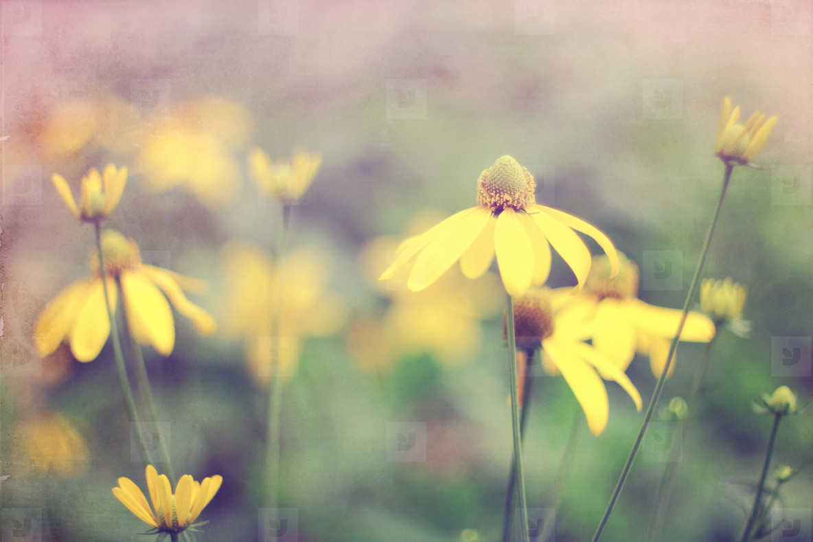 vintage little flowers