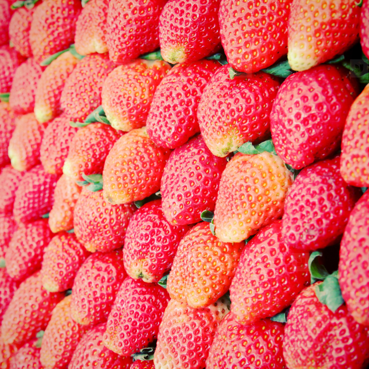 Row of fresh strawberry