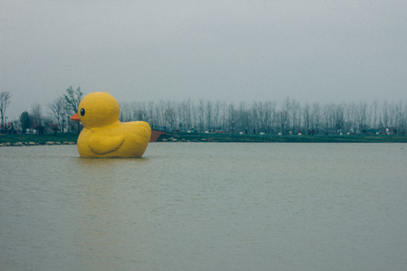 Lonely rubber duck