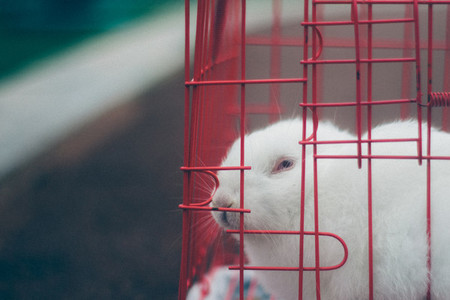 Rabbit in Cage