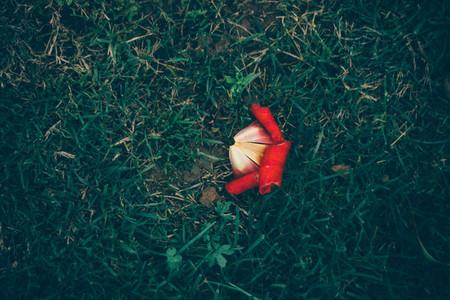 Dying Petal