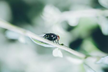Fly   Macro Image