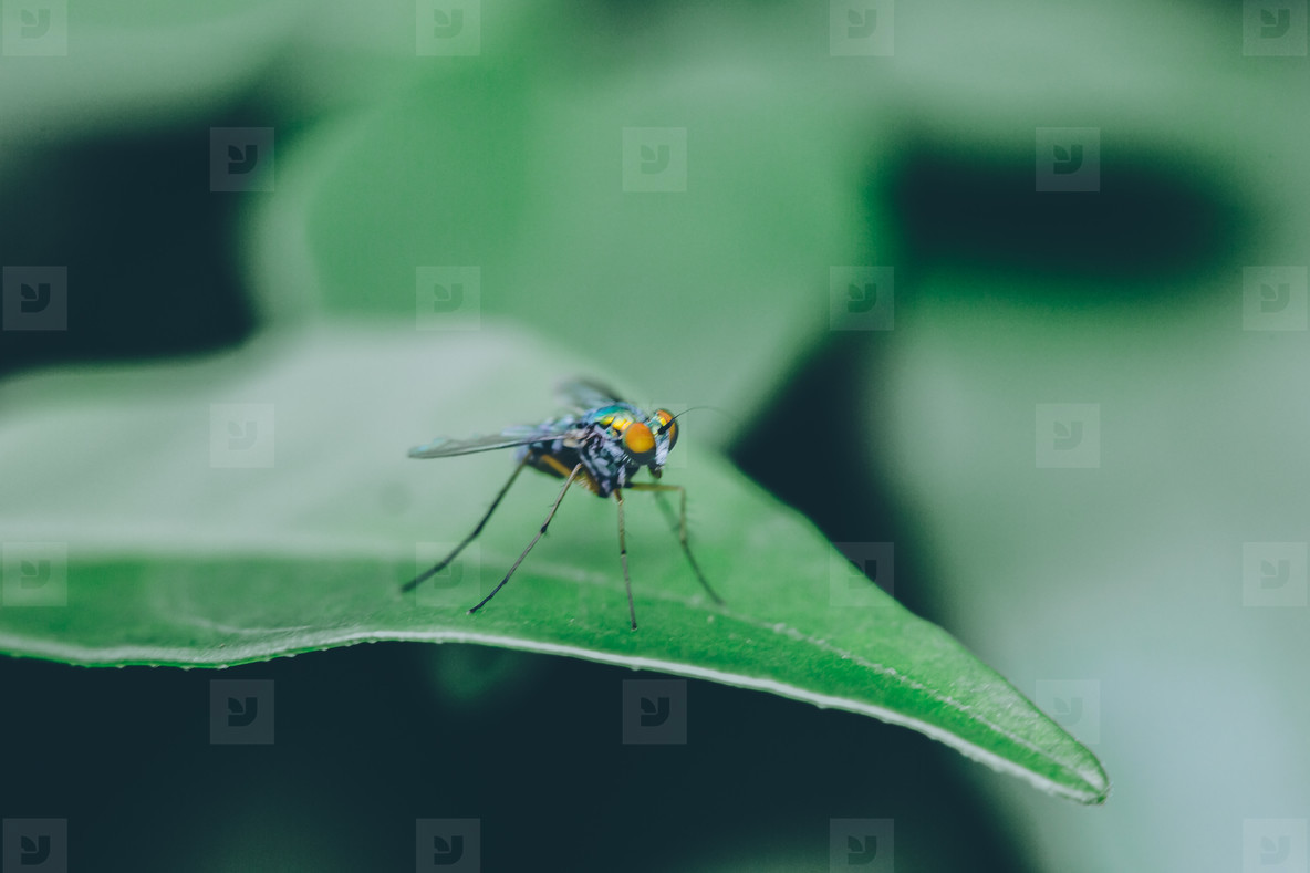 Insect   Macro Image