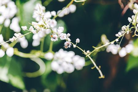 Bees  Flowers