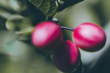 Tree Berry