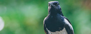 Bird on Gate