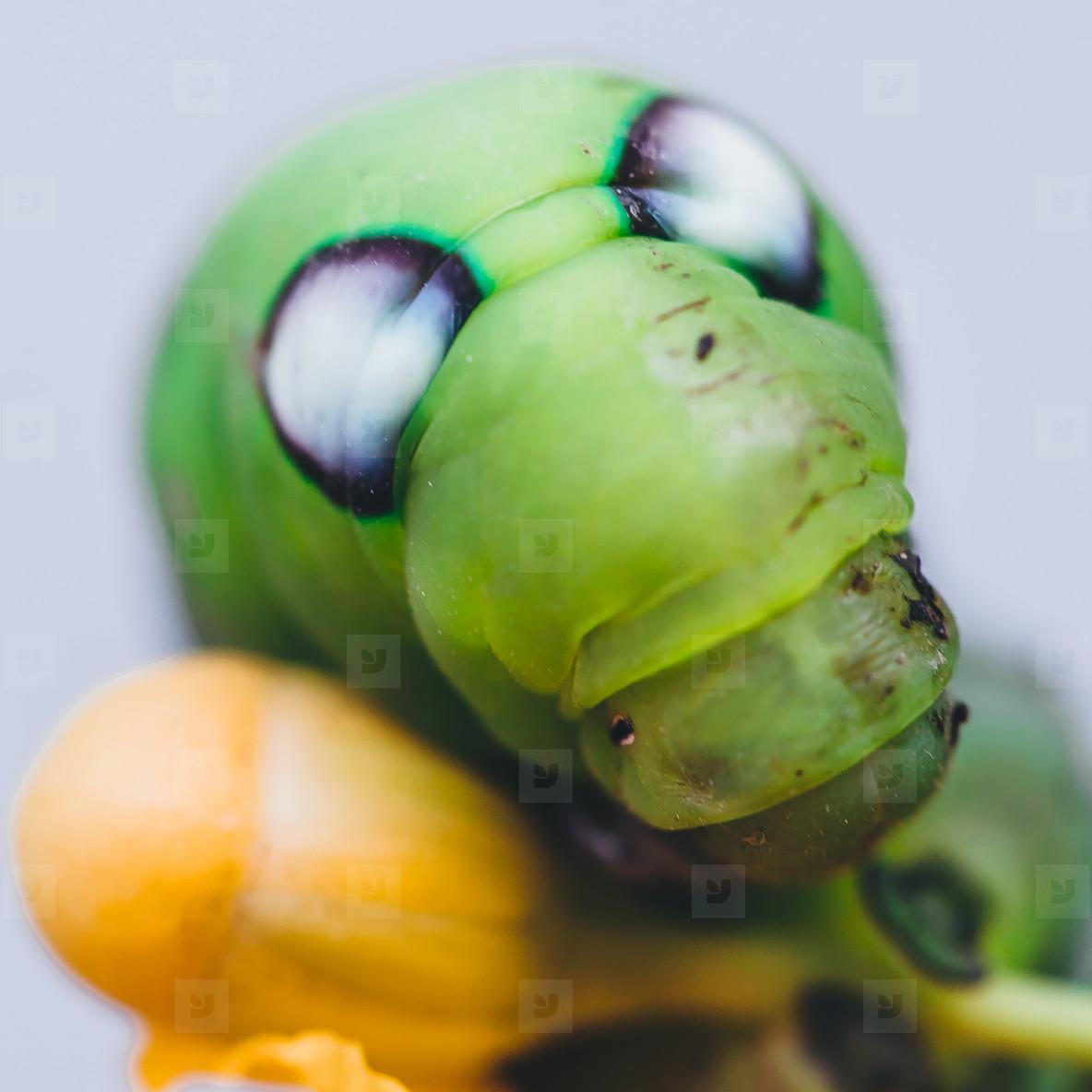 Caterpillar Close up