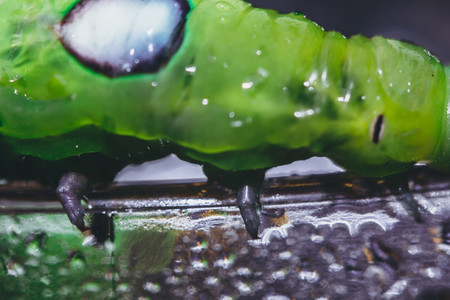 Caterpillar Close up