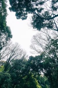 Tokyo 12