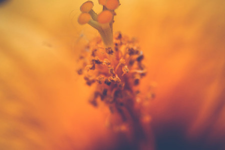 Abstract Botanical
