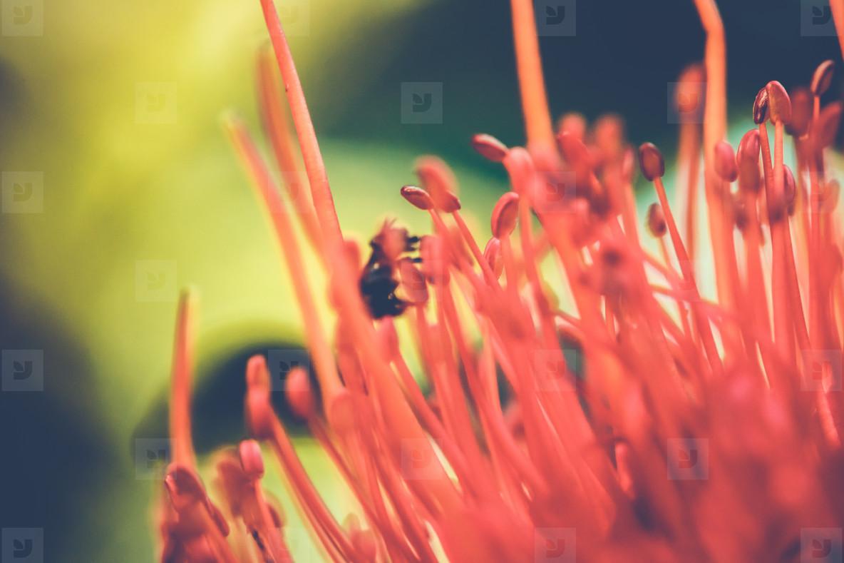 Abstract Botanical