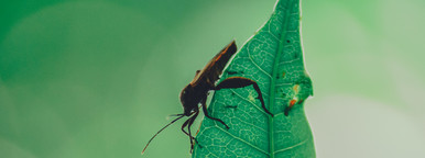 Insect   Leaf