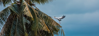 Flying Bird   Tree