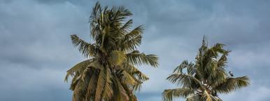Birds  Tree   Storm Clouds