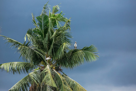 Birds  Tree  Storm Clouds