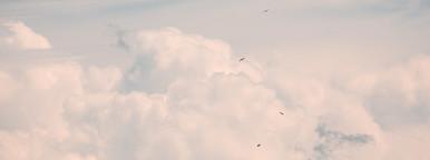 Little Flying Birds