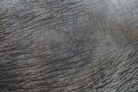 Elephant Skin Pattern