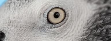 Bird Closeup