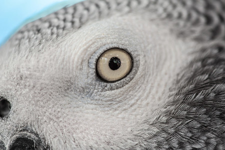 Bird Closeup