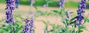 Purple flowers grass field