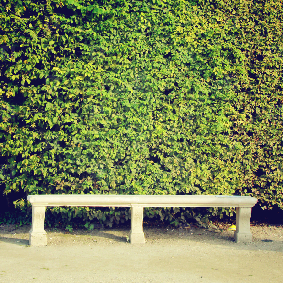 Stone bench and ivy plant wall