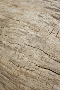 old wood 2