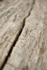 old wood 3
