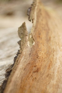 old wood 4