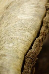 old wood 7