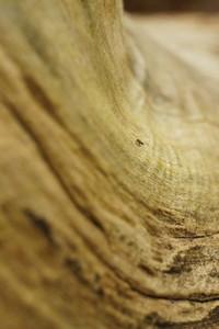 old wood 11