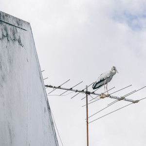 Bird on TV Antenna