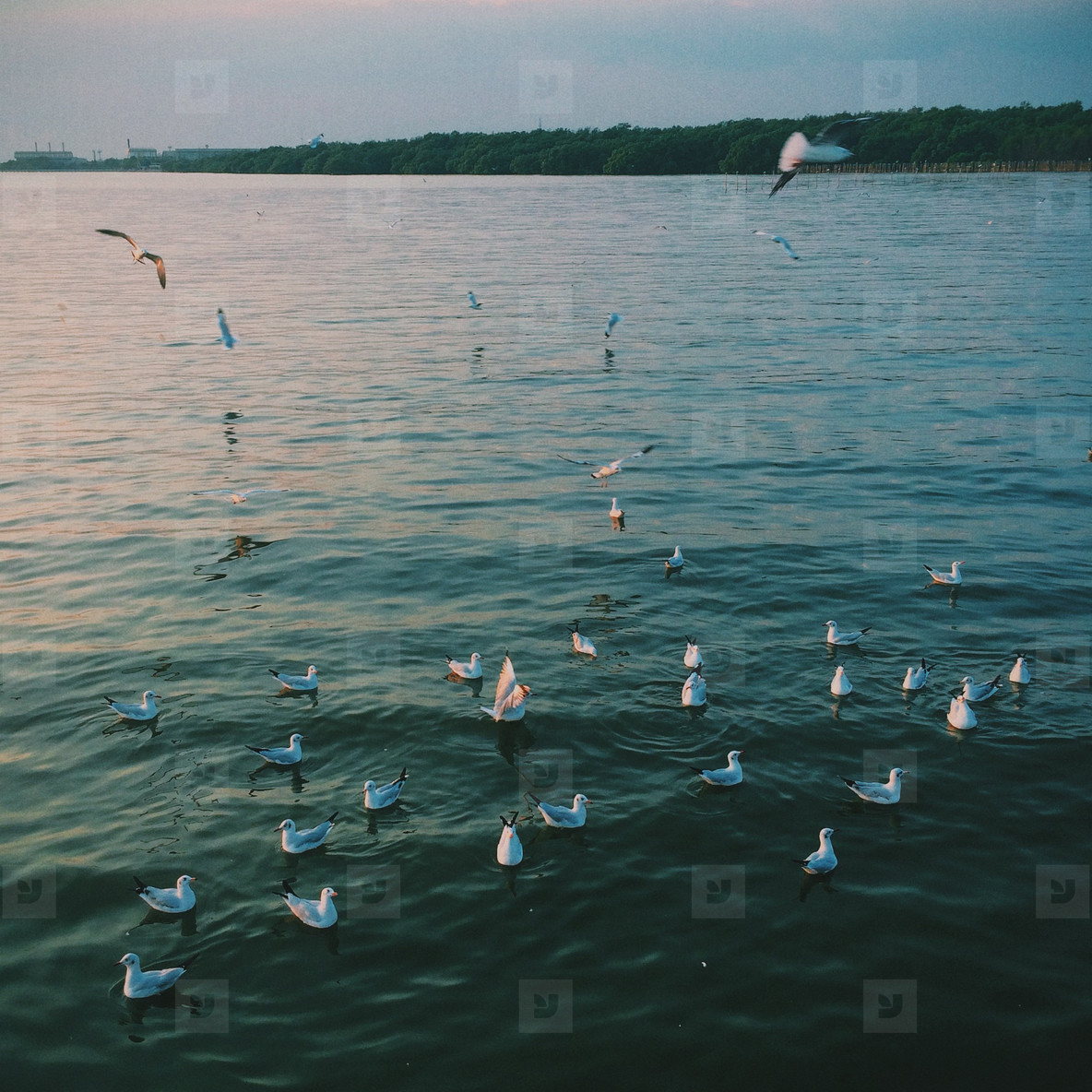 Seagull on water  at Thailand