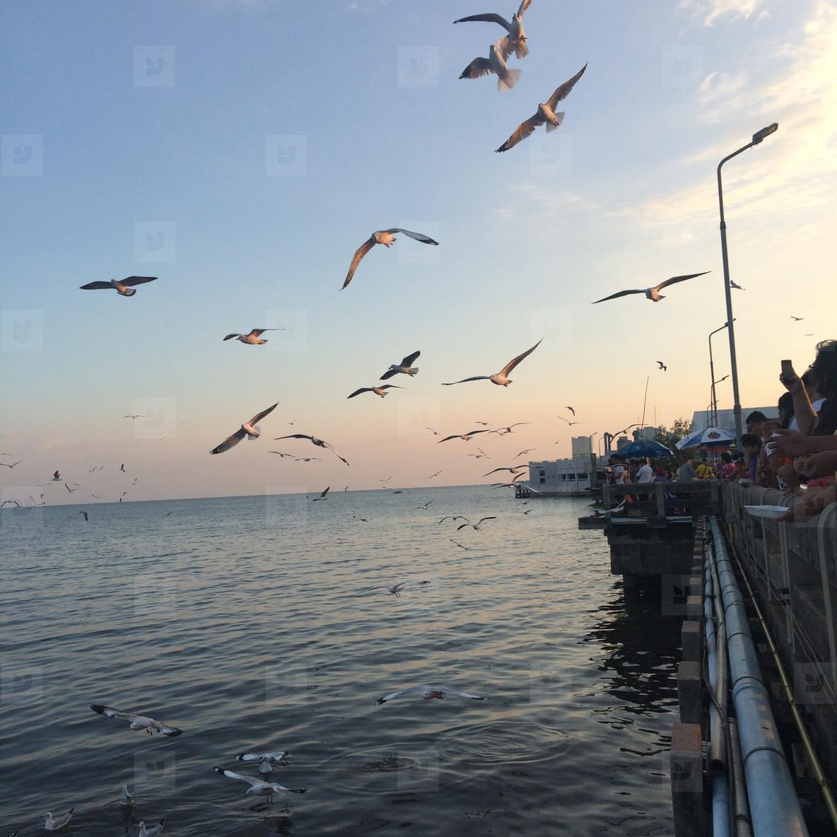 Tourists enjoy feeding seagulll