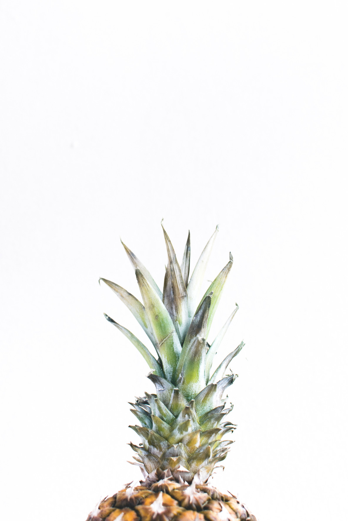 Tropical pineapple isolated