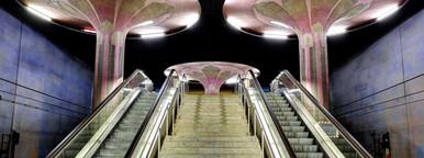 Frankfurt Underground Mushrooms