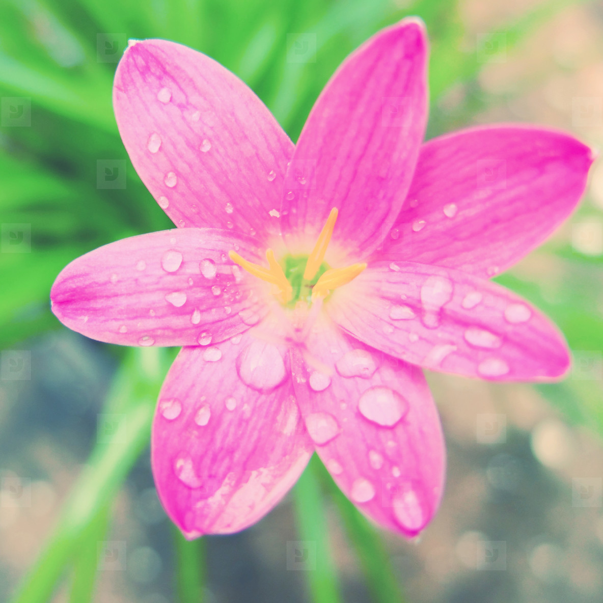 Pink blossom flower