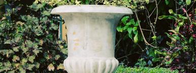 Green plants on vintage vase
