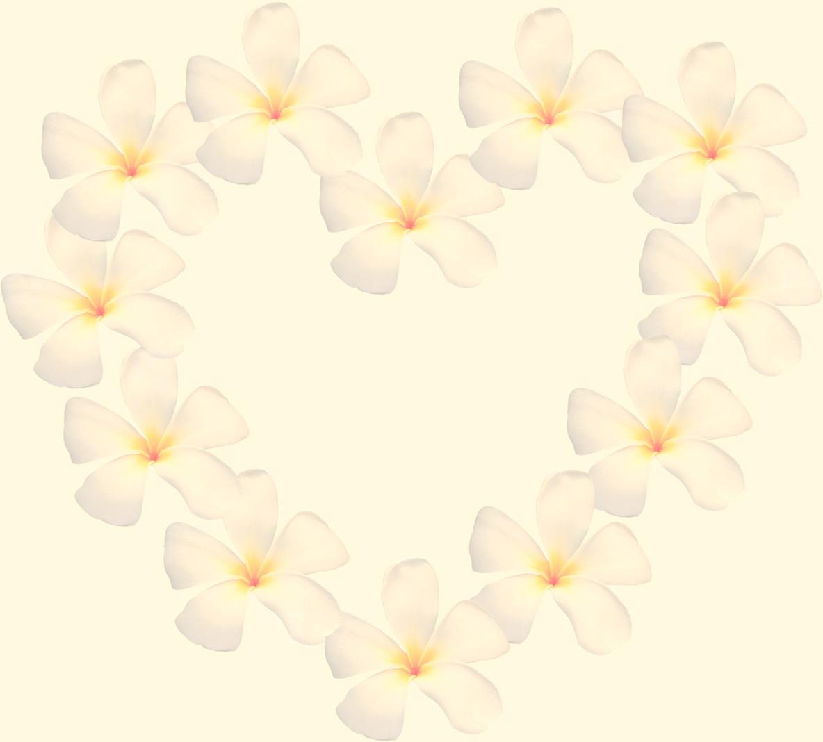 frangipani shape as heart