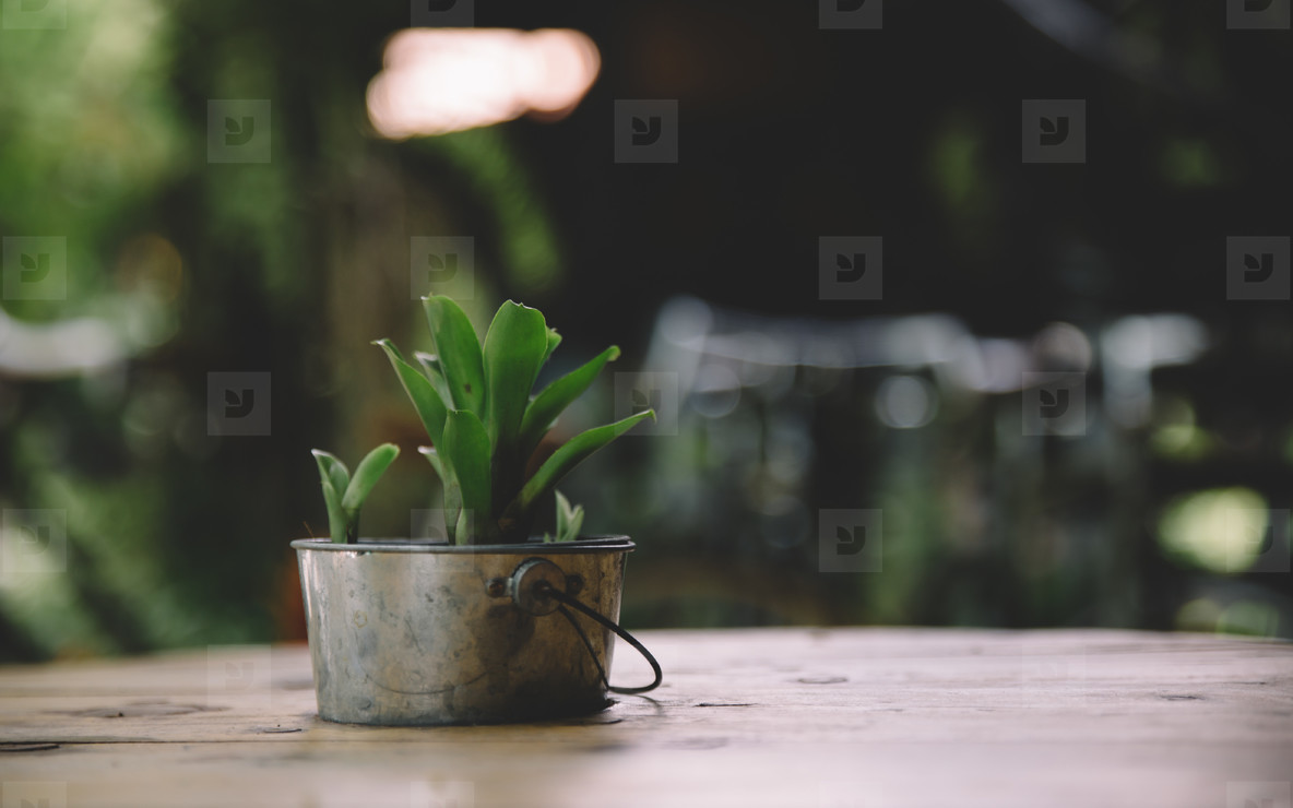 Cafe Table   Plant